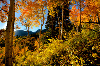 Fall Colors in Utah's Wasatch Mountains above Alta, Utah.